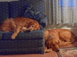 Even quiet Christmas mornings can lead to a nap! Faith on the sofa and Buddy ever close by.