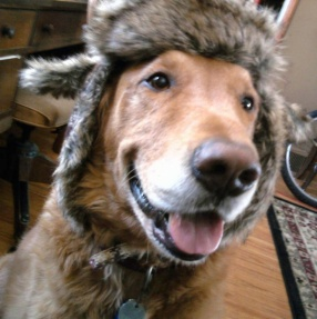 Here's Tucker in his favorite winter hat. He is one stylish senior!